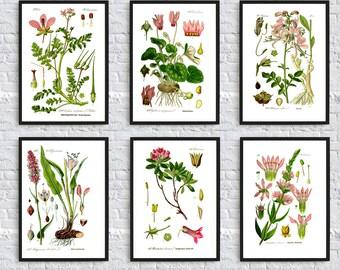 Beautiful Pink flowers collection Botanical illustration print garden plant wall art decor floral decor dorm room decor SET OF 6