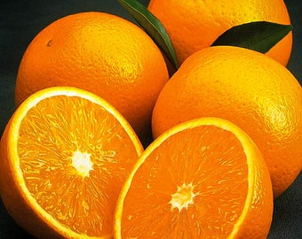 Olinda Valencia Orange Tree 5 Gallon