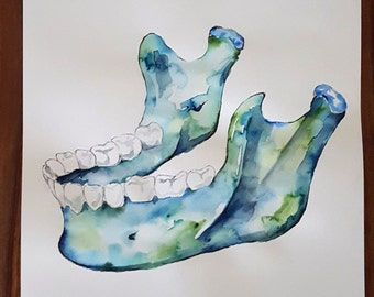 Watercolour Anatomy Art- Mandible