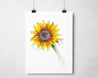 Original Print: Common Sunflower