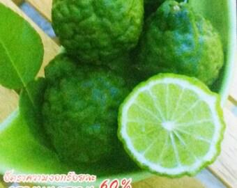 5 Organic Seeds Thai Kaffir Makrut Lime Citrus hystrix FREE SHIPPING
