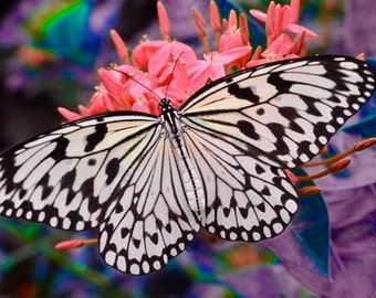 Butterfly Photograph, Butterfly Photography