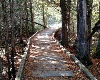 Walkway through Nature, Sandy Pond Trail, Baxter State Park, Appalachian Trail, Maine, Matted Photography, Cabin Art, Wall Art