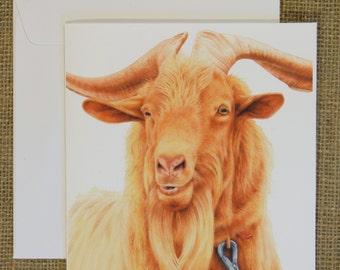 Golden Guernsey Goat Card