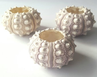 Sputnik Sea Urchin Shells