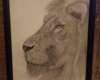 Lion Drawing- Framed
