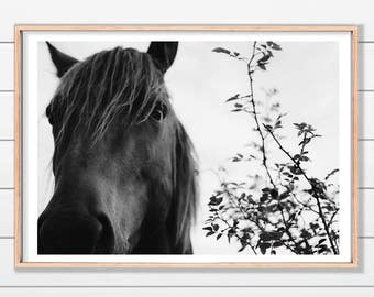 Black Horse Print, Contemporary Art Print, Instant Download, Wall Art Photography, Printable Poster, Horse Print, Wall Art