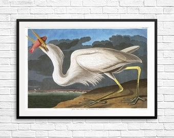 Great White Heron, Great Heron, Great Herons, Great White Herons, Great Heron Art, Great Heron Prints, Great Heron Posters, Audubon Prints