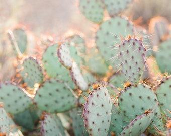 Prickly Pear Print, Desert Print, Southwest decor, Cactus Print, Minimalist Art, Desert landscape, Fine Art
