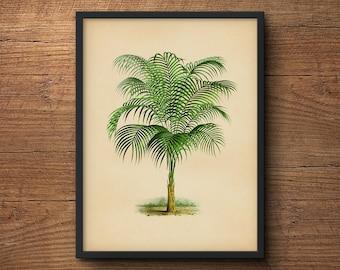 Topical palm tree art, Palm leaf wall decor,  Palm leaf prints, Palm leaf wall art, Palm trees print, Tropical plant, Framed botanical art