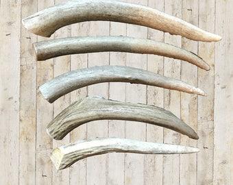 Organic Deer Antler Dog Chews | Medium Antler | Natural Dog Bone | FREE SHIPPING