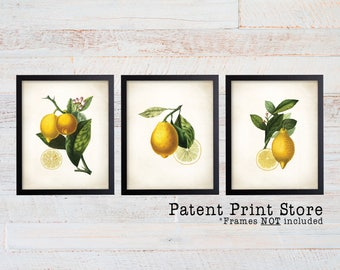 Lemon Botanical Art Prints. Lemon Prints. Flower Wall Art. Botanical Print. Kitchen Art Prints. Dining. Botanical Wall Art. Farmhouse. 225