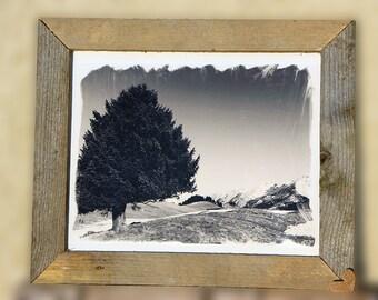 tree vintage effect