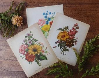 Floral bouquet art. Illustrated botanical art. Floral art set. Floral wall art. Vintage botanical art set. Vintage floral art.