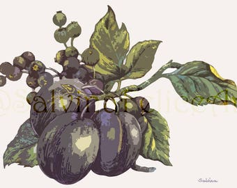 """Digital fine art print from my original painting with ink and watercolors """"plums and Blueberries"""", digital art, drawing, painting, illustration"""