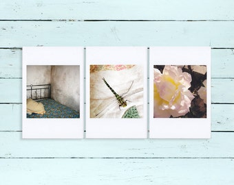 Nature ephemeral triptych - bed, rose and Dragonfly