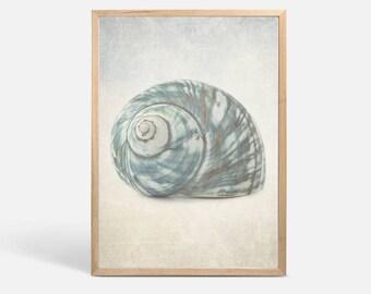 Seashell Photography, nautical print modern coastal decor, large wall art print, coastal art beach house art bathroom wall arte art