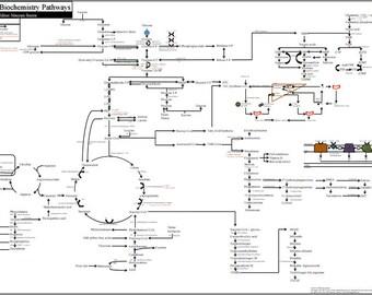 Metabolic Biochemistry Pathways Poster