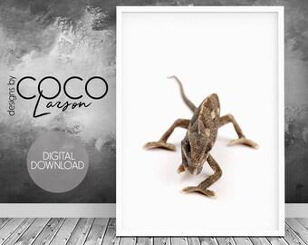 Chameleon print, exotic pet, reptile poster, lizard photo, chameleon poster, rainforest wall art, vintage cameleon, reptile wall art