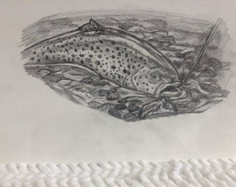 Trout Swimming After Fly in Creek *original drawing*