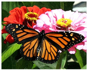 Monarch Butterfly & Zinnia Note Card Set
