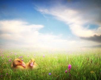 Goslings in Flower Field, digital Backdrop, Fantasy, Photomanipulation, Photoshop, download, Art
