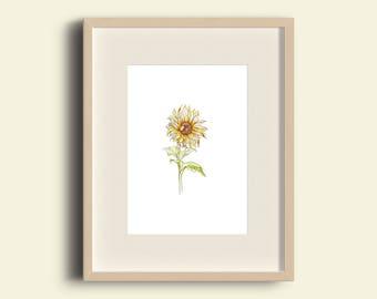 A4 Botany Print - Sunflower
