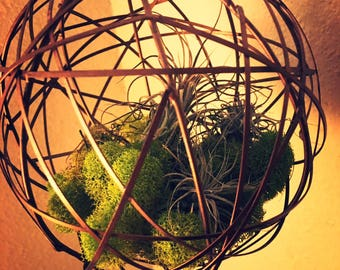 Hanging Wire Sphere Air Succulents