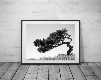 Desert Tree Photo, Black-White Photography, Digital Print, Wall Art, Printable Poster, Digital Download, 4 JPG's