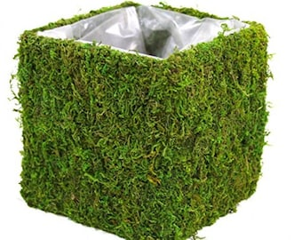 Green Moss Vase Pots