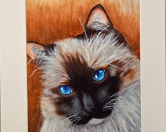 Ragdoll Cat, 8X10 matted print of original artwork
