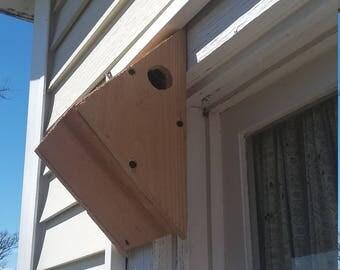 Small songbird house