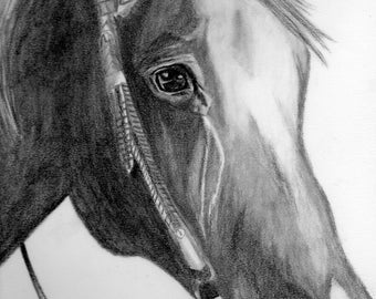 Original A3 Horse Drawing
