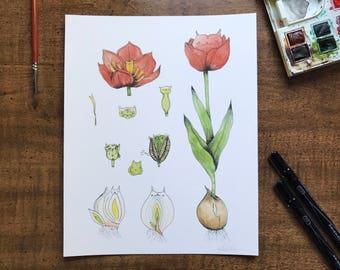 Amaryllis Cat Botanical Giclée Print