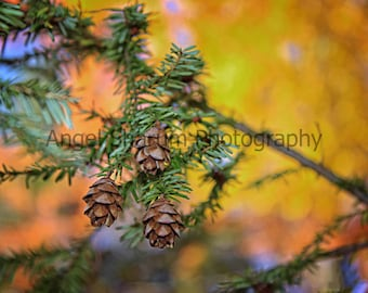 Fall Baby Pinecones Digital Photograph-Digital Download-Photography-Pinecones-Baby Pinecone-Fall-Autumn-Nature