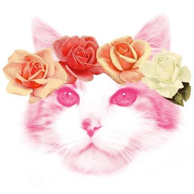 blossomandcat