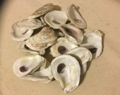 Oyster Shells For Crafts Or Beach Decor From Apalachicola FL Small Flat Side