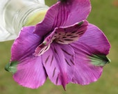 HUMMINGBIRD FEEDER--Larger Sized Alstroemeria in Violet and White
