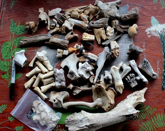 Lot of assorted animal bones and bone pieces DESTASH