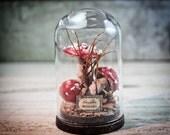 Mushrooms Sculpture in a GLASS DOME Miniature, Amanita Muscaria, Natural History, Nature, Fungus, Cabinet