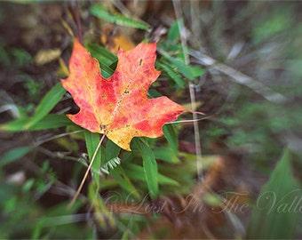 Fine Art Photography, Nature Photograph, Photo of a Leaf, Fall Leaves, Autumn Print, Rustic Decor, Wall Art, Woodland, Orange, Green, Yellow