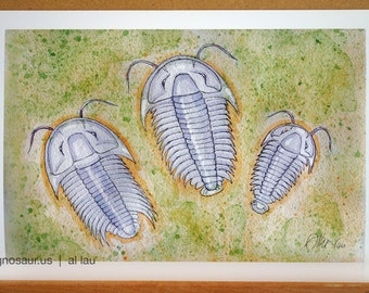 Three Trilobites (13 x 19)