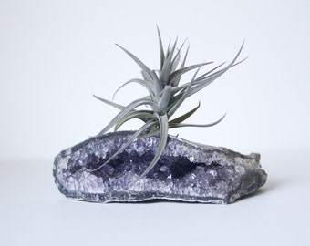 Unique Crystal Air Plant Display, on Amethyst Geode, February Birthday Gift For Nature Lover, Green Thumb, Under 50, Boho decor