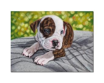 "BULLDOG american dog puppy on blanket colored pencils painting Sandrine Curtiss ORIGINAL Art 7x9.5"""