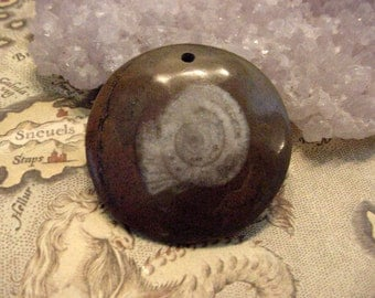 Fossilized Goniatite  Ammonite Drilled Cab / Bead for jewelry making, snail 7gon18