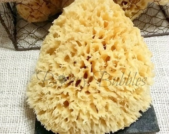 Natural Sea Wool Sponge  5 - 6 inch - local from Florida