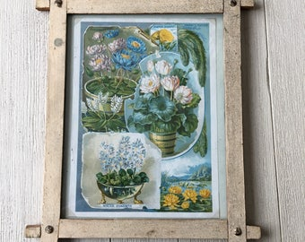 Water Lilies Lotus Hyacinth Antique Print Shabby Frame