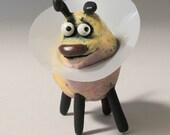 GEORGETTE the cone pet