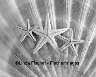 Seashell Wall Art Black White Home Decor Starfish Scallops Macro Nature Digital Download Fine Art Photography Linda Fischer Fischerimages