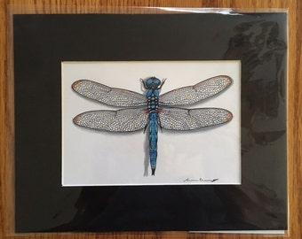 Hand Drawn Comanche Skimmer Dragonfly
